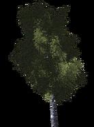 Дерево 7