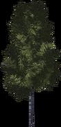 Дерево 4