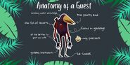 Anatomy of a Guest ENG