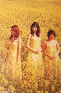 Tanpopo Single Version (1)