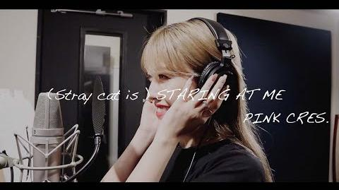 PINK CRES - (Stray cat is) STARING AT ME (Recording). - (Stray cat is ) STARING AT ME 〔Recording〕