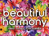 Hello! Project 2019 SUMMER