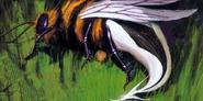 Cenobite Bee