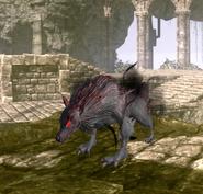 Smallerwolf