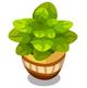 Green Pot Plant