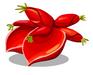Ceibo Blossom