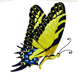 African Swallowtail