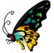 Richmond Birdwing