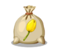 Yellow Tulip Seed