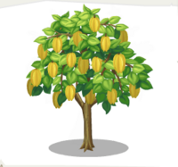 Starfruit Tree.png