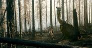 Image Eragon (39)