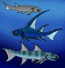 Mesacanthus Parexus Ischnacanthus.JPG