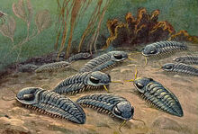 Trilobites in the bottom of the ocean.jpg