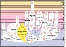 Trilobite lineage.png