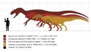 Allosaurus specimen