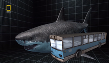 Megalodon compared to a bus.png