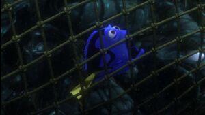 Dory captured