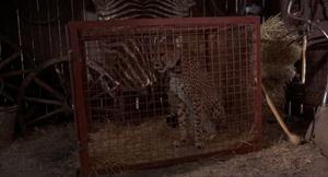 Duma caged