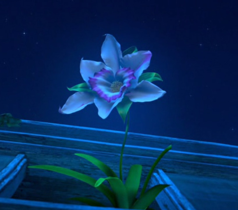 Cupid's Arrow Orchid
