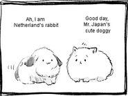Neds rabbit and pochi