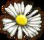 Substances White myrtle petals.png
