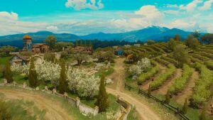 Tw3 bw coronata vineyard.jpg