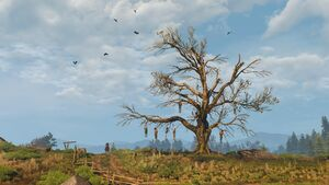 Tw3 hanged mans tree.jpg