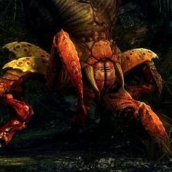 Krabbspinne