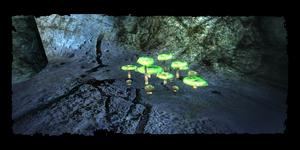 Stelle, wo der Pilz in der Höhle gesammelt werden kann