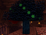 Darkwood (Natura)