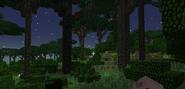 Dense twilight forest ground view