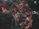 Renesans EP