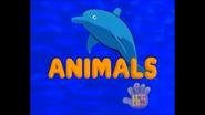 Opening So Many Animals USA