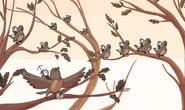 Bragga on birds