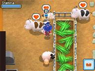 Cows (GrB)