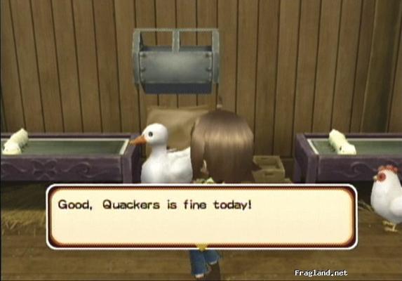 Duck (ToT)