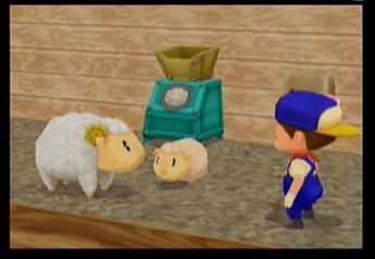 Sheep (MM)