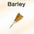 Barley-wheat.png