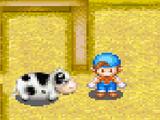 Cow (FoMT)