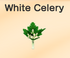 White-Celery.png