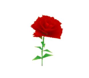Flowers (SoM)