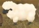Sheep (ToT)