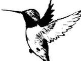 Кельвин-колибри