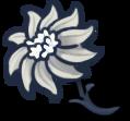 Обычный цветок