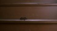 Spider 07