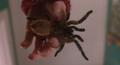 Spider 09