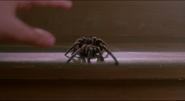 Spider 08
