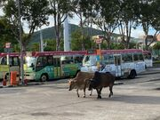 Sai Kung(Wai Man Road) terminus(2) 18-07-2020