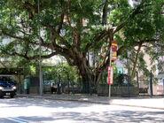 Sai Ning Street1 20180601