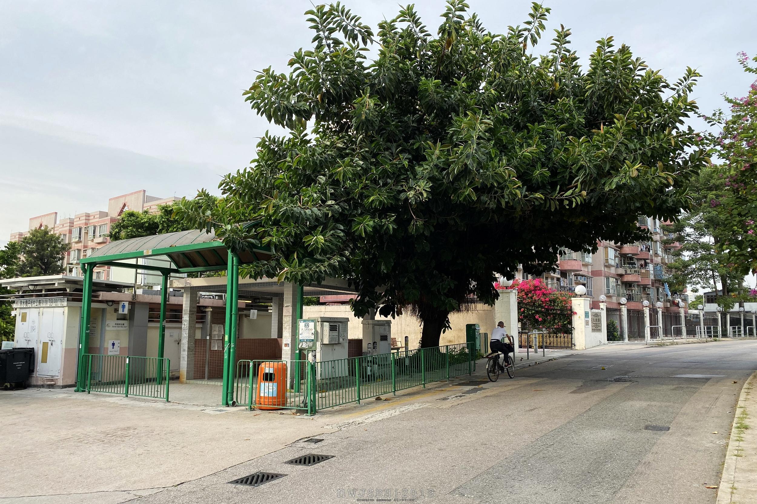丹桂村總站